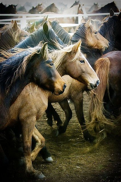 Pioneer Woman Photography / Ree Drummond (photography,horses)Wild Animal, Beautiful Horses, Ree Drummond, Animal Baby, Pioneer Woman, Baby Animal, Baby Dogs, Nature Beautiful, Wild Horses