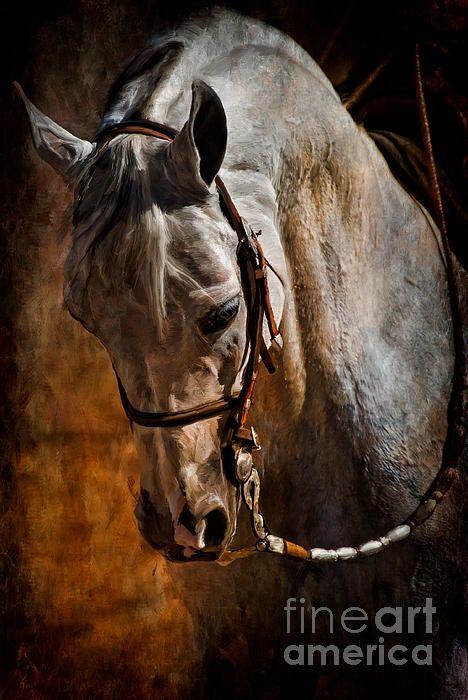 Gray Arabian Horse Painting | Horse in art | Pinterest