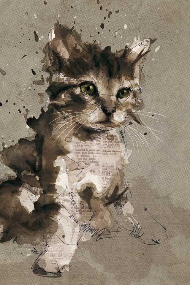 mały kotek opuszcza wiadomości, Newspaper cat!