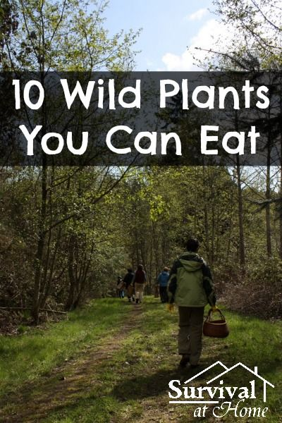 10 Wild Plants You Can Eat (via Survival at Home)