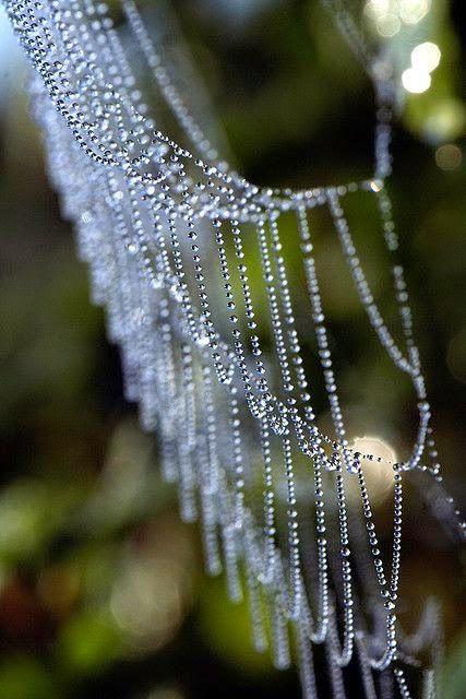 20 Belas Imagens de Natureza