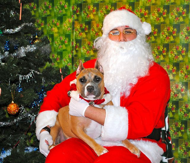 This was taken at our Lakewood CA location.  Petco and Santa welcome all sizes and breeds!