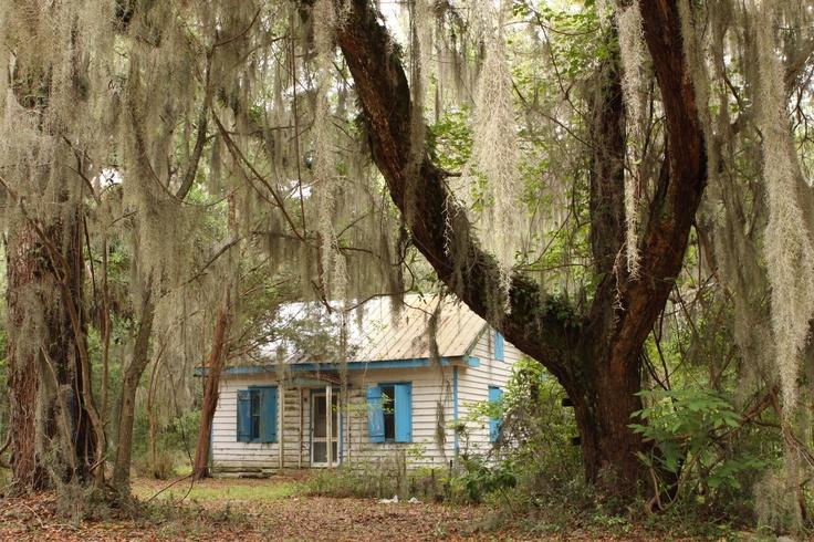 SC Haint Blue shutters, live oaks & spanish moss #beautifulcreatures #kamigarcia
