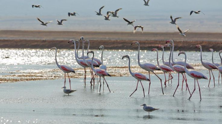 Flamingos at the Salt Pools, north of Eilat - by Dafna Tal for the Israeli Ministry of Tourism