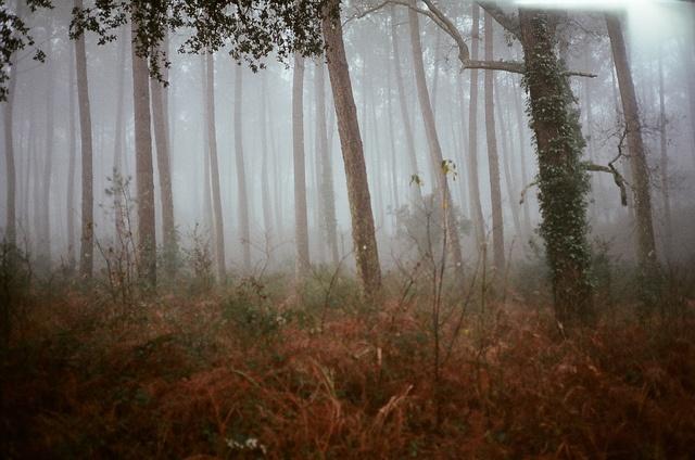 Sebastian Zanella photography.