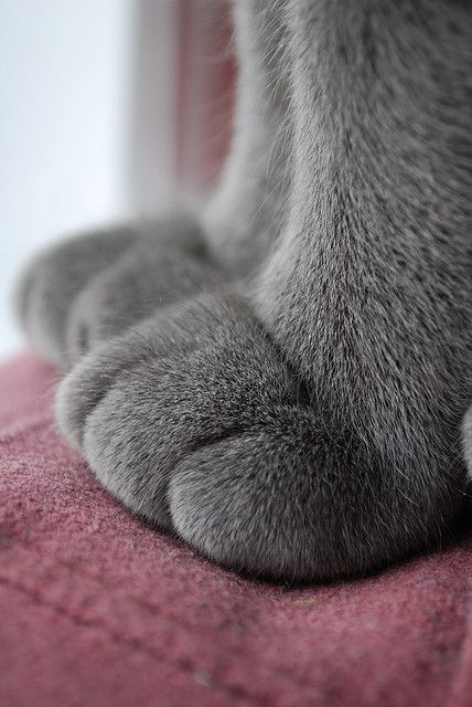 i love the paw