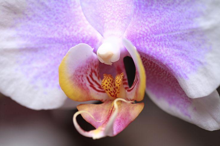 Orchid Healing Essences Gisela Andersson Brisbane Australia www.giselaandersson.com.au