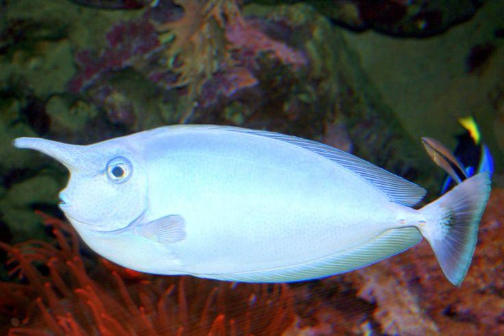 Unicorn Fish! God is Amazing Pinterest