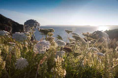 Late Summer Flowers Sark Island Tourism Wedding Pinterest And Islands