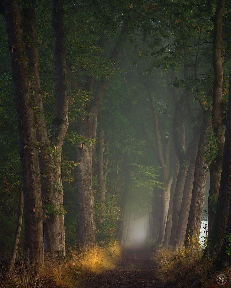 8,751 отметок «Нравится», 81 комментариев — Tree_Magic (@tree_magic) в Instagram: «. . Today's Featured Artist: @ellenborggreve . Many Congratulations!! Many Thanks…»