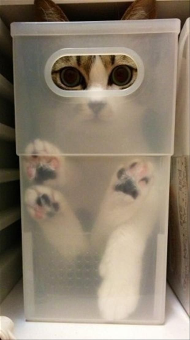 Cat stored neatly. But you better watch out when s/he gets out of there!