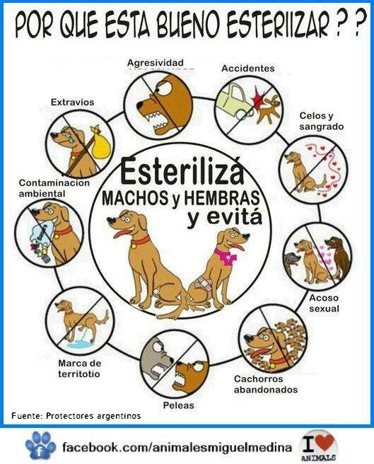 TODOS podemos ser parte de la solución .... Evitemos más abandono animal #ESTERILIZA