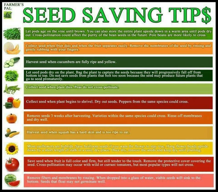 415 best images about growing farm fresh food on pinterest gardens raised beds and apple tree - Money saving tips in gardening ...