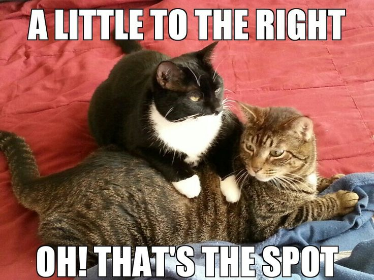 91 Best Massage Humor Images On Pinterest Massage