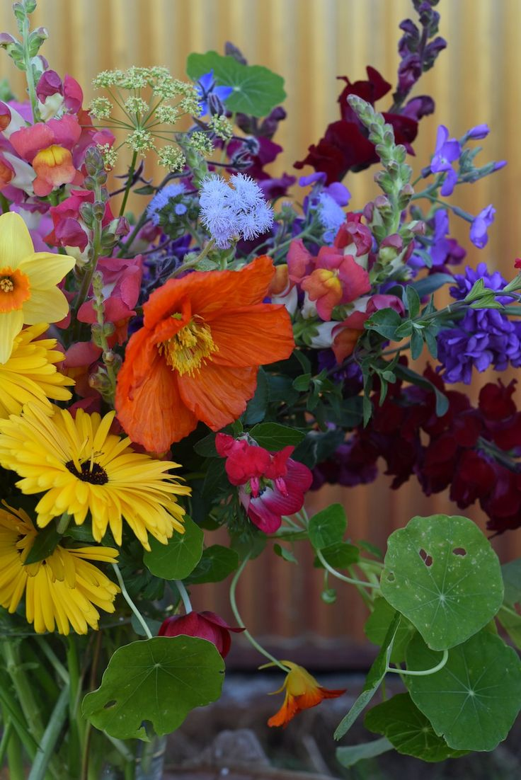 rainbow flowers. calendula, iceland poppy, snapdragon, stock, ageratum, parsley heads, anemone, nasturtium, daffodils.