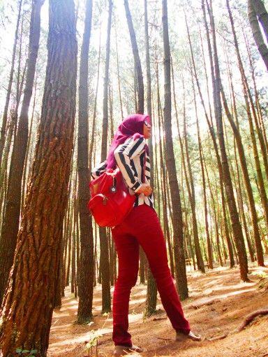 Wandering alone.  Location : Pine Forest, Imogiri, Yogyakarta, Indonesia.