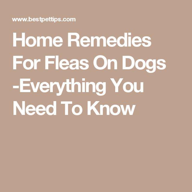 Best 25 Home Remedies Fleas Ideas On Pinterest Dog Flea