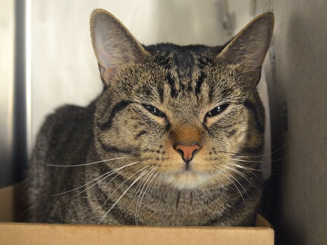 Price 35507 Animals Foster Cat Cat Adoption