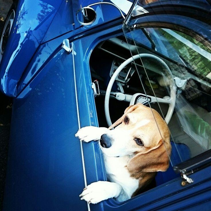 Citroen 2cv Wedding Car Beagle