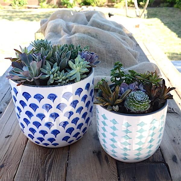 Cactus Bar Blue Rules Hand-Painted Stoneware