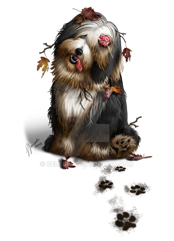 Bearded Collie - Commission by ceres86.deviantart.com on @DeviantArt