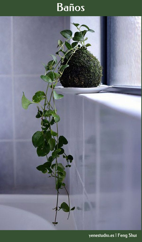 Plantas Baño Feng Shui: Decoración con plantas en Pinterest