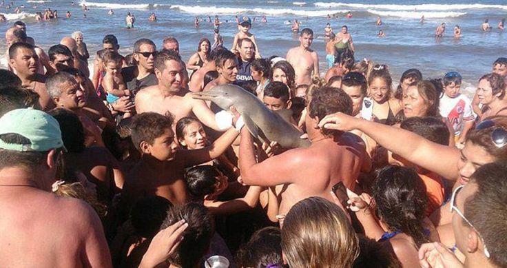 La bêtise humaine n'a pas de limite, ces touristes ont longuement utilisé le petit un bébé dauphin pour faire des selfies avant de le laisser se déshydrater sur le sable.
