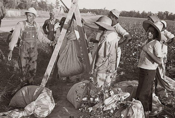 picking cotton by hand | When people picked cotton for pay, they were payed based upon how much ...