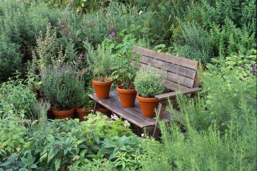 7 лекарственных растений для вашего сада. В своем саду можно выращивать не только декоративные, но и полезные культуры. И речь не только о пряных травах, собственном урожае зелени, овощей, фруктов и ягод, но и о лекарственных растениях. Они не только позволяют заготовить собственные фиточаи, но и незаменимы в народной медицине и кулинарии. У каждого дачника есть уникальная возможность не покупать целебные травы в аптеке, а вырастить их на своем собственном участке, продолжая столетние…