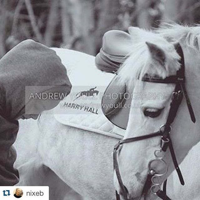 We hope you have enjoyed a perfect valentines weekend with your horses   #Repost @nixeb with @repostapp. ・・・ @robynbyrne_wanttobeeventer #harryhall #horses #horseriding #ponies #pony #love #showjumping #horseriding #beautiful #new @harry_hall_riding
