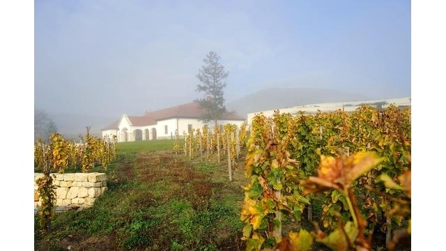 Patricius winery-Tokaj