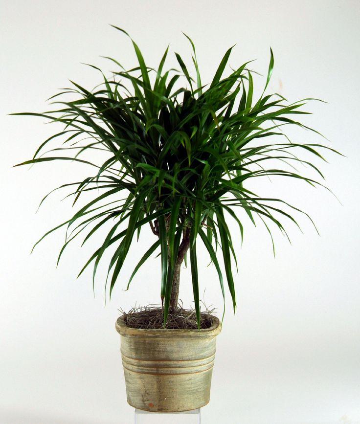 112 best Indoor Plant Info images on Pinterest | Indoor, Plant ...