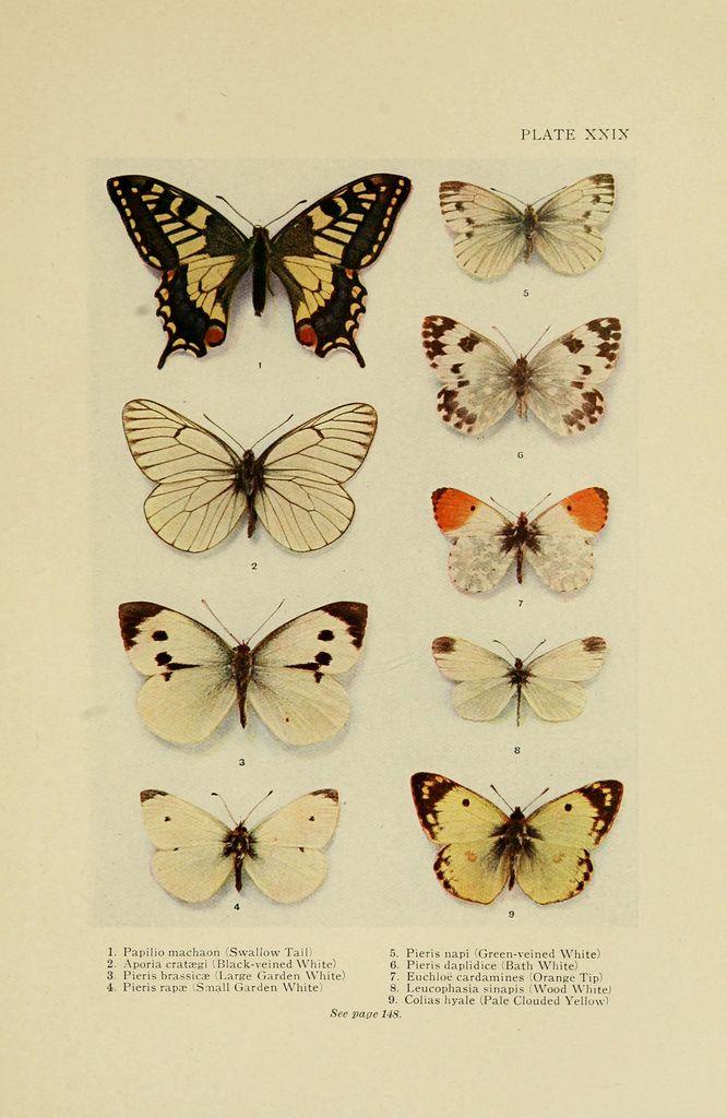 biodiversidad - insectos