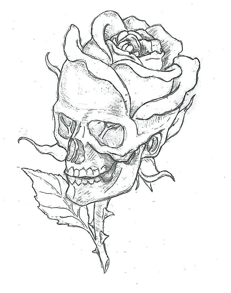 Simple Drawings Of Roses Rose Simple Skulls And Roses Drawings