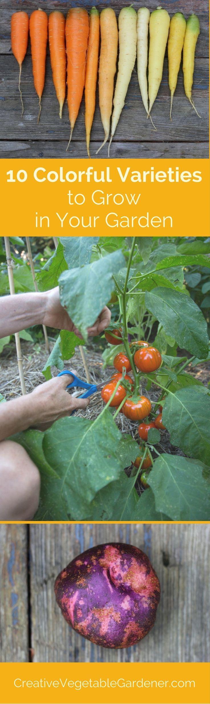 Garden Bush: 406 Best Unusual Fruits & Vegetables For The Home Grower