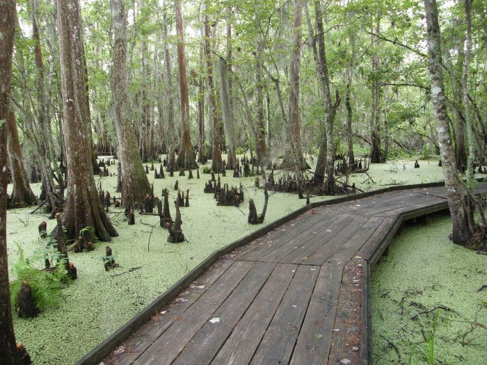11 Completely Awesome Things To Do in Louisiana For Free