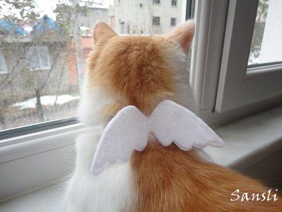 Cat collar-adjustable collar-custom collar-crochet cat collar-cat accessories-angel.Adjustable cat collar white with Bell by sansli on Etsy https://www.etsy.com/listing/116790795/cat-collar-adjustable-collar-custom