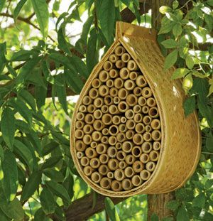 Mason Bee House for natures best pollinators