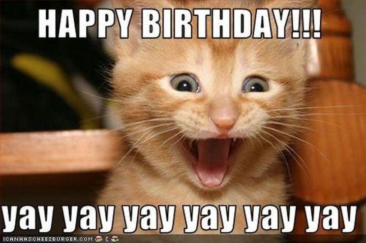 101 Funny Cat Birthday Memes Happy Birthday Yay Yay Yay Yay Yay Yay Happy Birthday Cat Cat Birthday Memes Excited Cat I do see the similarities (first post on this sub yay me). 101 funny cat birthday memes happy