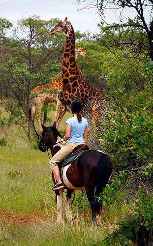 Gazing at Giraffes - horseback safari in africa… I think if i just stumbled onto a Giraffe, my horse would have a major freak out haha