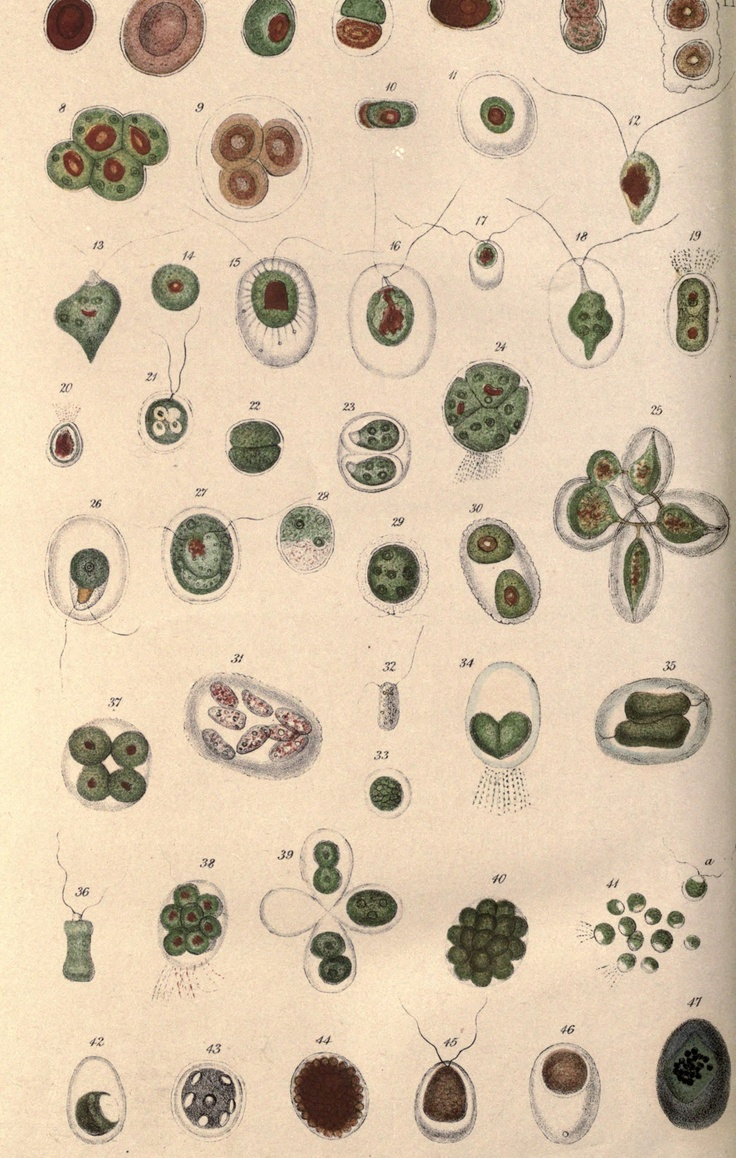 Plant cells. Botanical and physiological memoirs London, printed for the Ray Society, 1853.