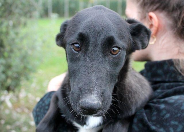 La dolce Rouse spera di trovare una famiglia presto! info: adozioni@leudica.org