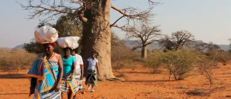 Gifts of the baobab – a new video featuring the Venda women and Sarah Venter