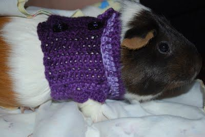 Guinea pig sweater pattern