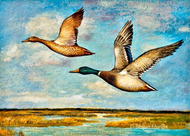 """Mallards in Flight"" by Shijun Munns, acrylic on paper. Donation for the AWARE art auction #Art #OilPaintings #BirdArt #painting"