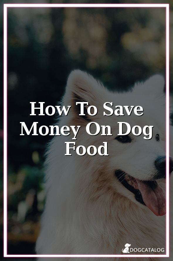 How To Save Money On Dog Food Food Aggression In Dogs Your Dog