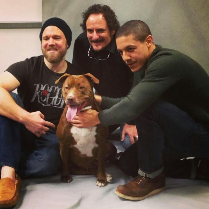 Ryan Hurst,  Kim Coates and Theo Rossi posing for pics with adoptable dogs. Just another reason to love them #soa #sonsofanarchy