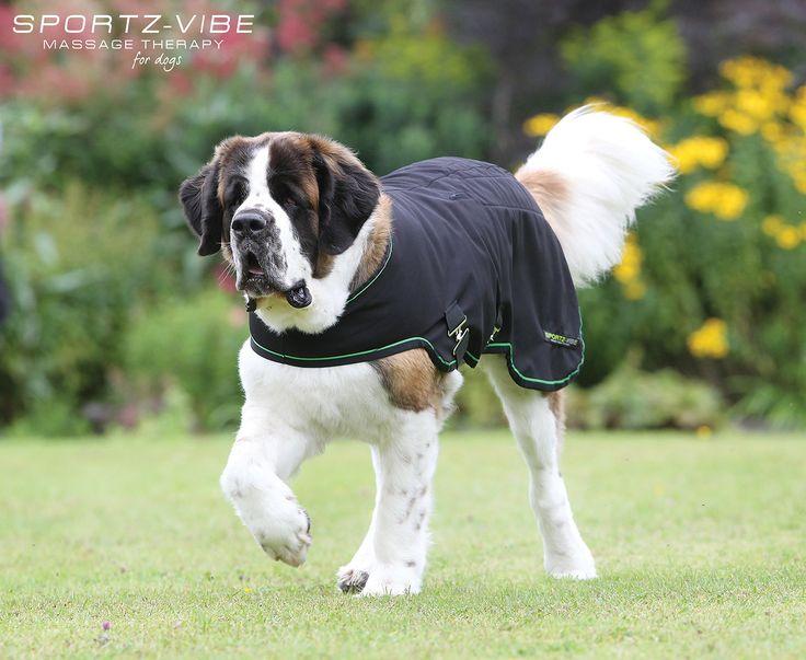 Sportz Vibe Massage Therapy Dog Rug