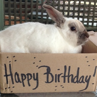 Happy Birthday bunny | rabbit heart | Pinterest | Happy ...