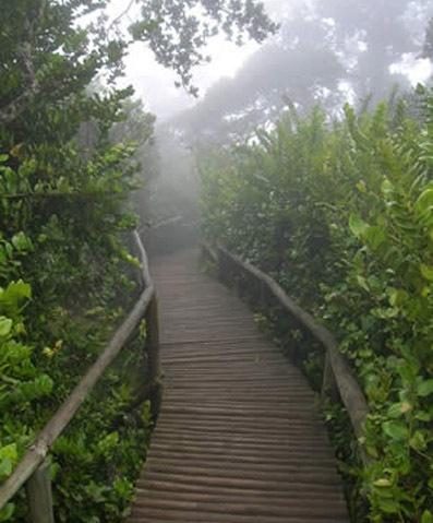 Parque Nacional Fray Jorge (Cloud Forest)